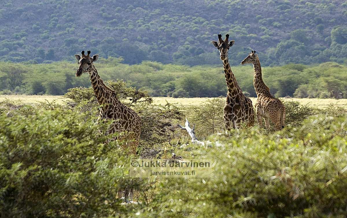 Shidolya Tours Safaris